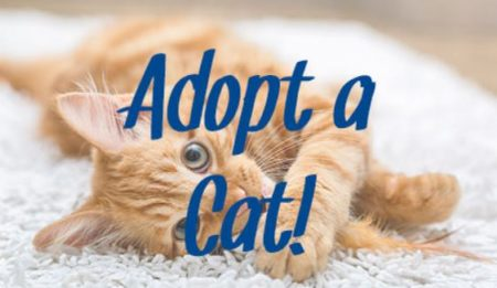 July 6th Adoption Event! Saturday at Bosley's by Pet Valu in Westbank!