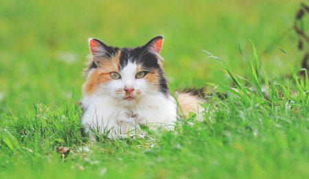 North Okanagan Farm Cat Spay/Neuter Project 2019