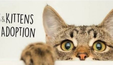 Saturday AUGUST 17, 2019 Adoption Event in Vernon at Pet Planet