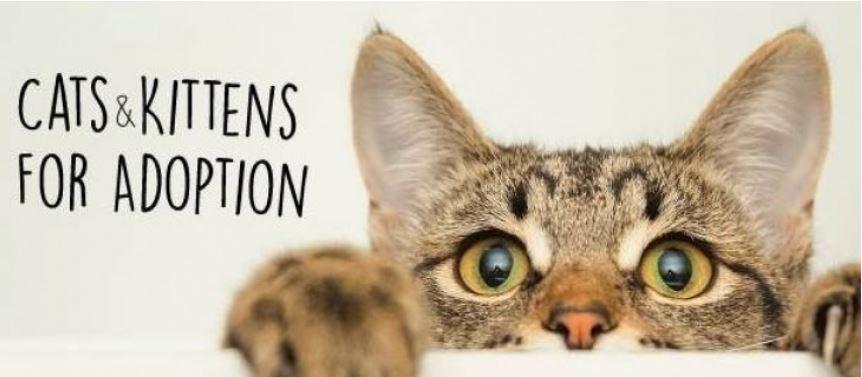 Saturday AUGUST 17, 2019 Adoption Event in Vernon at Pet Planet