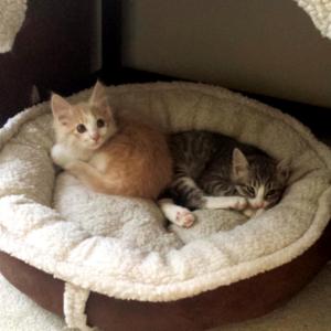 Newsletter – Kitten Season Has Arrived in the Okanagan